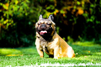 Donna French Bulldogs-1